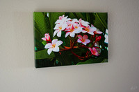 "Plumeria - 1.5"" gallery wrap and sealed"
